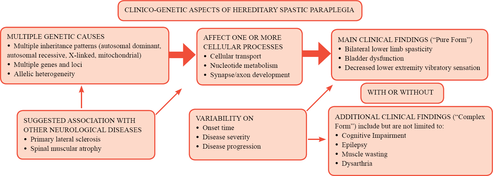 Figure 1: A schematic providing a simplified overview of the clinico-genetic aspects of hereditary spastic paraplegia.
